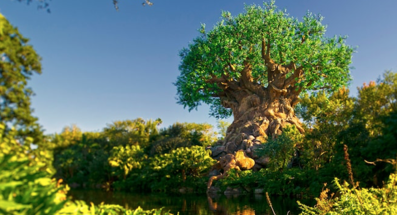 Best Attractions at Animal Kingdom with Little to No Wait